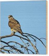 A Hawks Eye View Wood Print