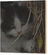 A Hiding Kitten Wood Print