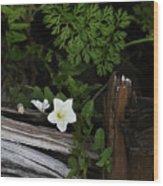 A Hobo Wood Print