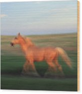 A Horse At Sandal Ranch Near Howes Wood Print