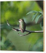 A Hummingbird Rests Wood Print