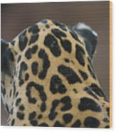 A Jaguar At Omahas Henry Doorly Zoo Wood Print