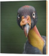 A King Vulture Sarcoramphus Papa Wood Print