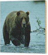 A Kodiak Brown Bear Ursus Middendorfii Wood Print by George F. Mobley