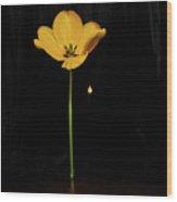 A Light In The Dark Wood Print