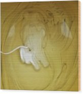 A Lion, But Not In Africa... Wood Print