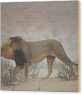 A Lion Pushes On Through A Gritty Wind Wood Print