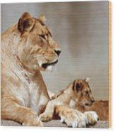 A Lioness And Cub Wood Print