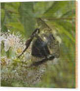 A Little Bee-hind Wood Print