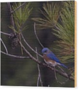 A Little Bluebird Wood Print