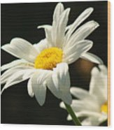 A Little Less Than Perfect Sunshine Daisy  Wood Print