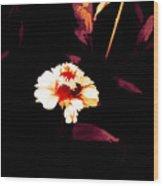 A Little Marigold Wood Print