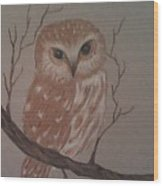 A Little Owl Wood Print by Ginny Youngblood