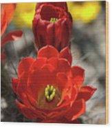 A Little Red Beauty  Wood Print