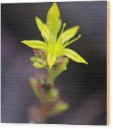 A Little Yellow Star  Wood Print