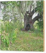 A Live Oak In Purgatory Wood Print