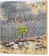 A Lonely Pine Tree Wood Print