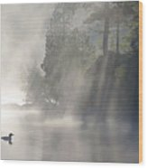 A Loon In The Mist Wood Print by Brian Pelkey