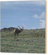 A Lotta Bull Wood Print