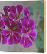 A Magenta Flower Wood Print