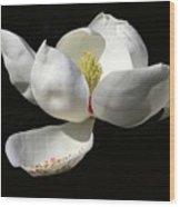 A Magnolia Flower Wood Print
