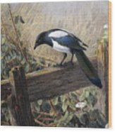 A Magpie Observing Field Mice Wood Print