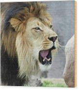 A Male Lion, Panthera Leo, Roaring Loudly Wood Print