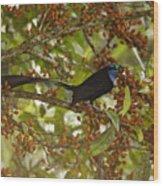 A Male Princess Stephanies Bird Wood Print
