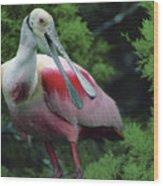 A Male Roseate Spoonbill Is In Breeding Wood Print