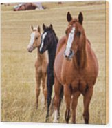 A Mare And Two Friends Wood Print