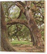 A Maze Of Oak Trees  Wood Print