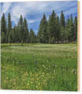A Meadow In Lassen County Wood Print