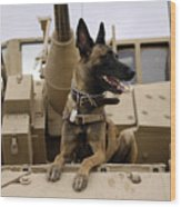 A Military Working Dog Sits On A U.s Wood Print