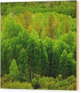 A Moment Of Green Wood Print