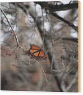 A Monarch For Granny Wood Print