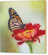 A Monarch Moment Wood Print