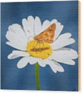 A Moth Collects Pollen On A Single Daisy Blossom. Wood Print