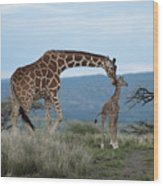 A Mother Giraffe Nuzzles Her Baby Wood Print