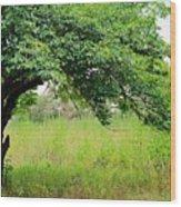 A Mulberry Summer Wood Print