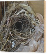 A Nest In A Box Wood Print