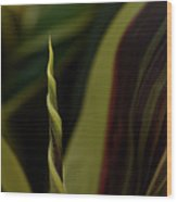 A New Leaf Is Born Wood Print
