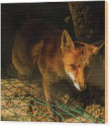 A Nocturne  Meeting With A Fox In The Woodland Wood Print