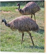 A Pair Of Emu Wood Print