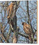 A Pair Of Hawks Wood Print