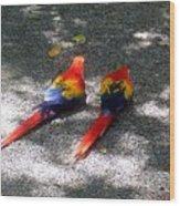 A Pair Of Parrots Wood Print
