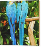 A Pair Of Parrots Wood Print