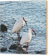 A Pair Of White Isbis Standing In The Shore Wood Print