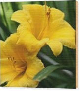 A Pair Of Yellow Day Lilies Wood Print