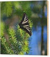 A Pale Swallowtail Vertical Wood Print