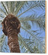 A Palm In The Sky Wood Print